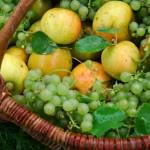 Panier de fruits du jardin